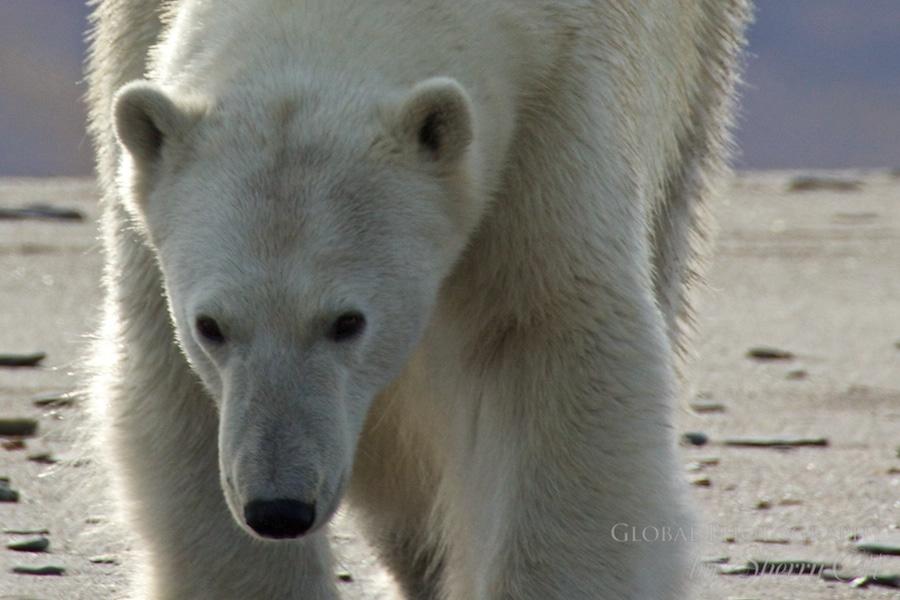 best day on earth polar bear