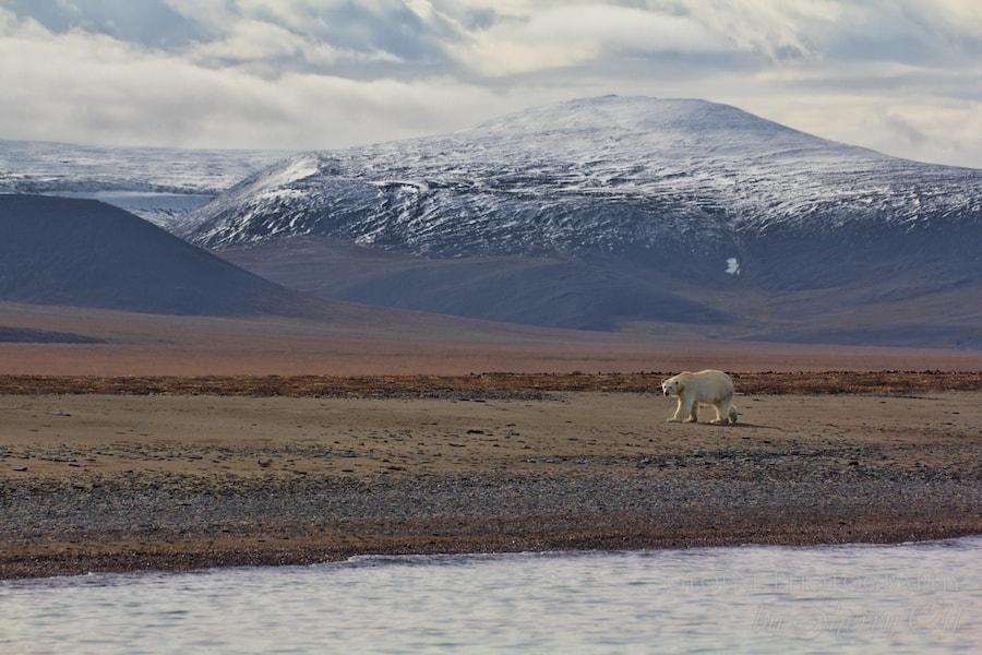 best day on earth wrangel island