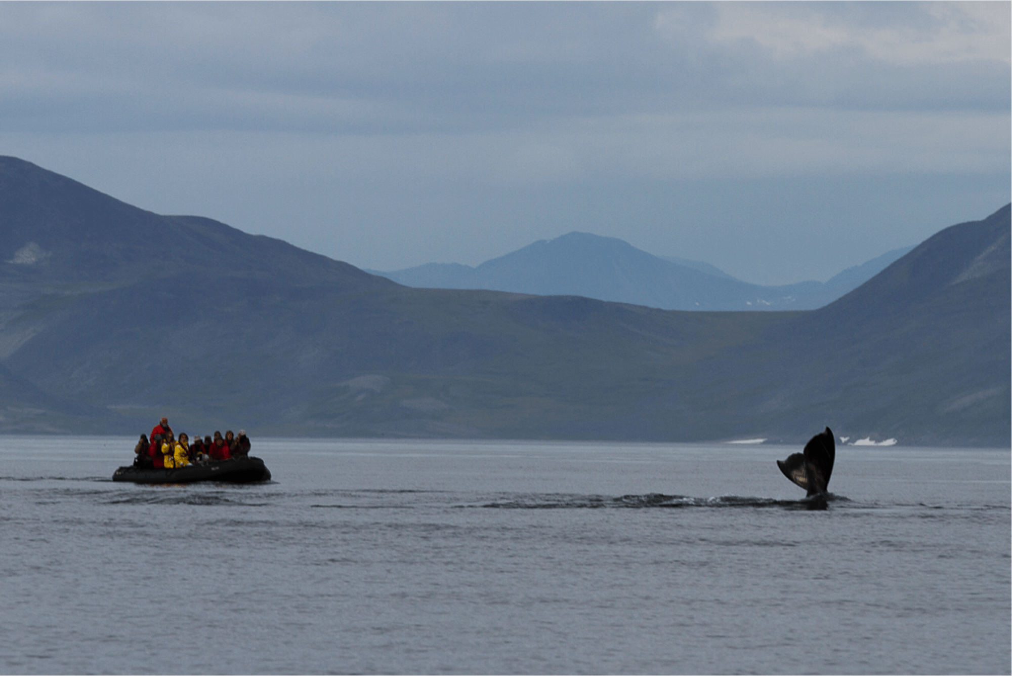 Expedition cruise whale watching