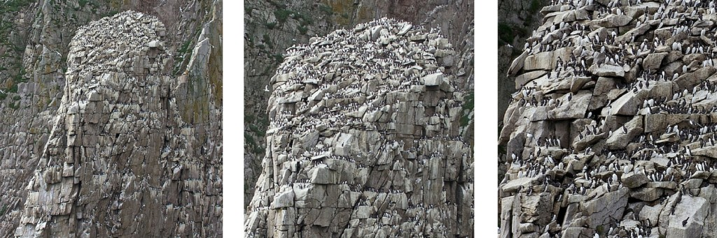 Birding tour bird cliffs