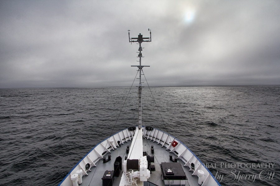 expedition cruise what to expect