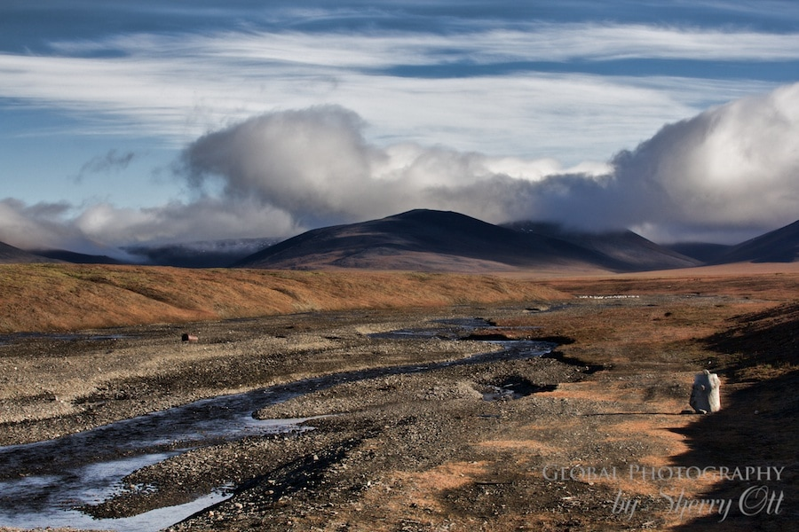high arctic tundra wrangel island