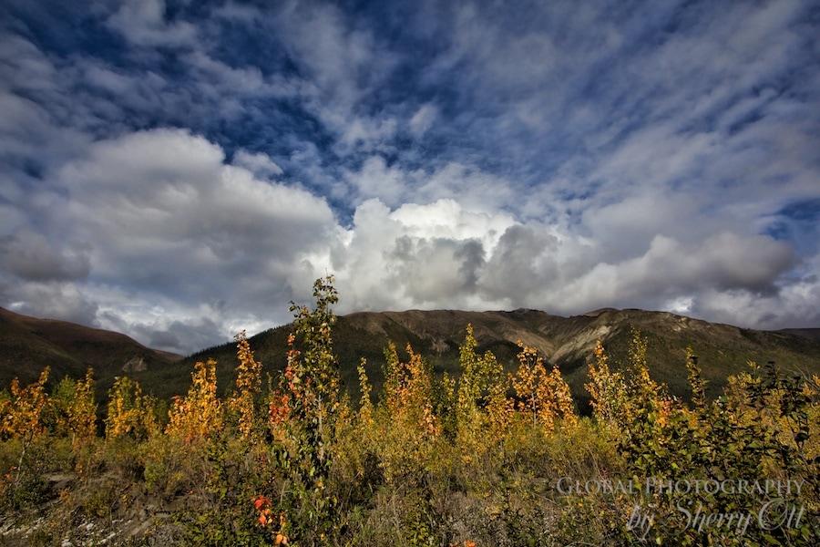 Autumn in the Arctic