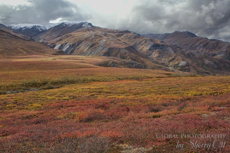 Dalton Highway tundra