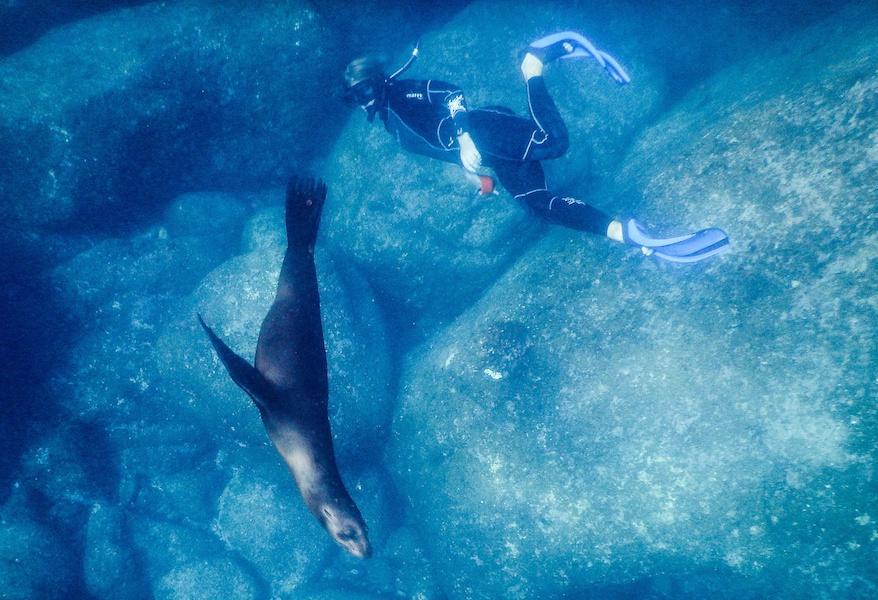 Snorkel Sea Lions, Los Islotes, Laura Sea of Cortez from Kristin