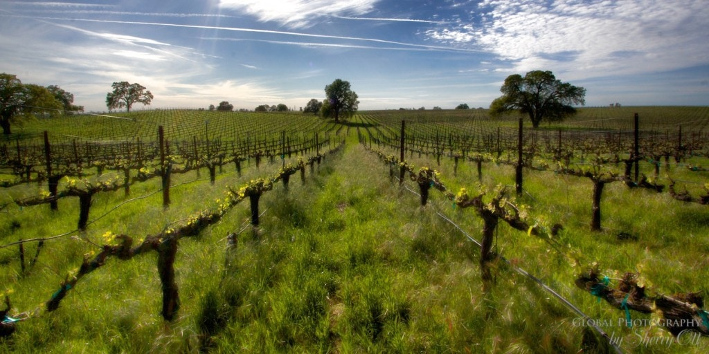Northern California Road Trip Lodi Wines