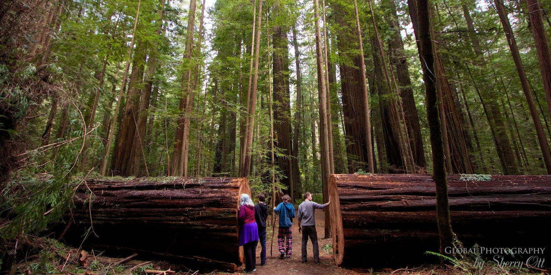 Founders Grove Redwoods