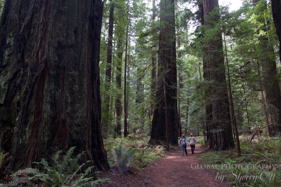 Redwoods national park northern california