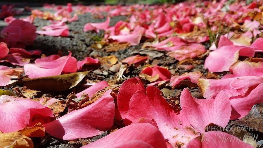 California wildflowers mendocino