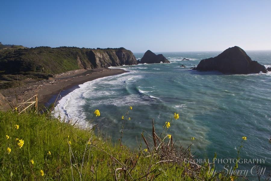 California Wild Flowers