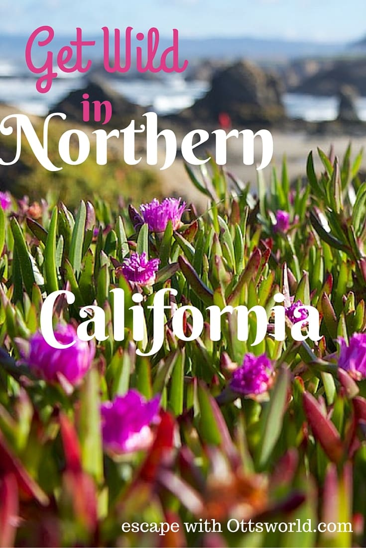 Go Beyond Cherry Blossoms and Get Wild in California Travel to see the California wildflowers and welcome Spring in Mendocino!  Take a coastal hike near Point Arena and rejoice that winter is dead.