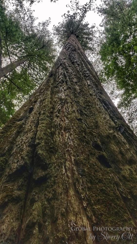 wellness travel redwoods