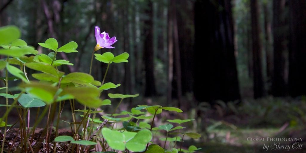 wellness travel redwoods national park