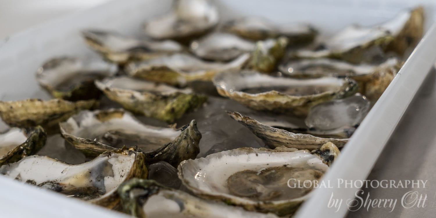 Riptide oysters new england