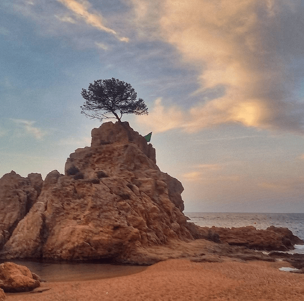 tossa de mar tree