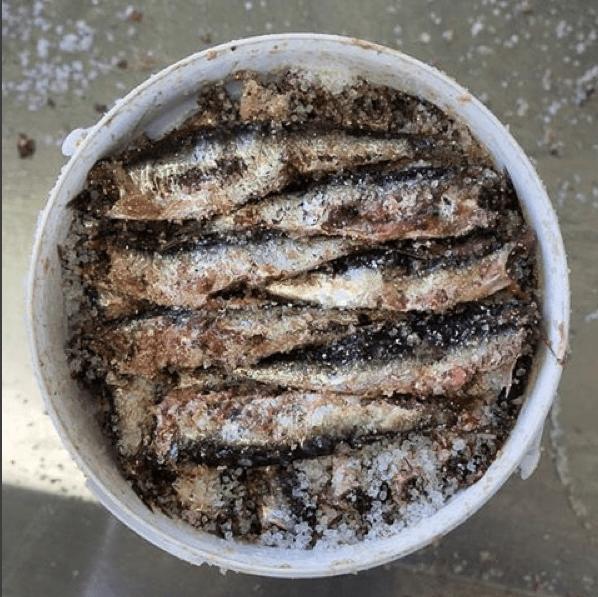 anchovies lescala