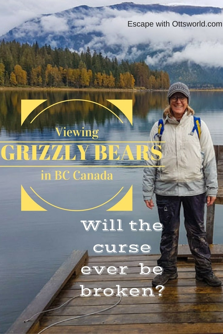 Viewing grizzly bears in BC Canada. Welcome to my bear curse - a curse so strong that it possibly stopped the salmon from arriving in BC.