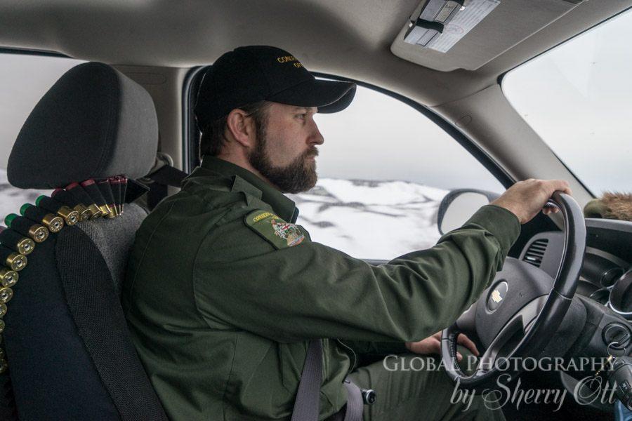 Polar Bear Alert Program Churchill