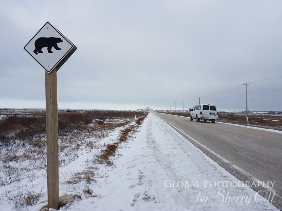 polar bear town churchiill