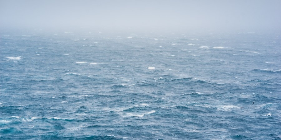 citizen science southern ocean