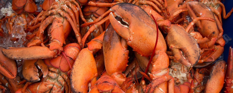 eat lobster new brunswick canada