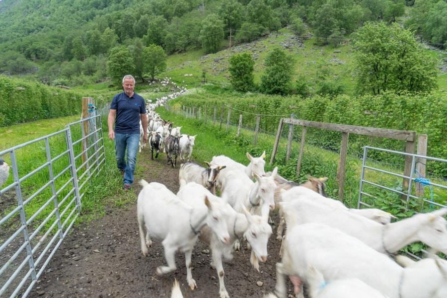 Farm visit norway itinerary