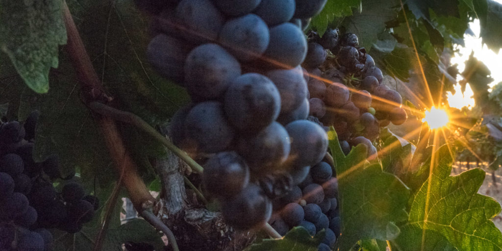 Gold Country wineries in California
