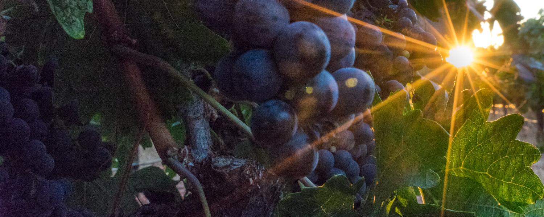 Santiago wine tours