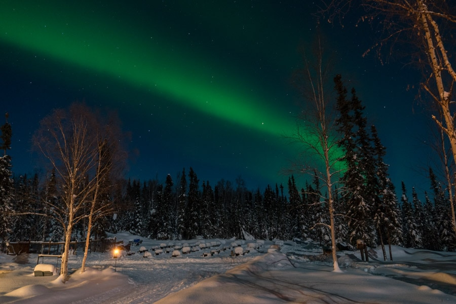 Fairbanks northern lights tour with dog sledding
