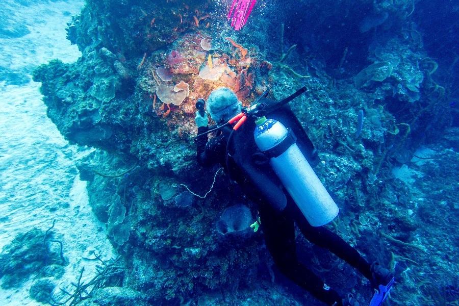 scuba diving surpriese Cozumel Mexico