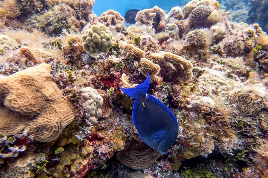 scuba diving surprises cozumel