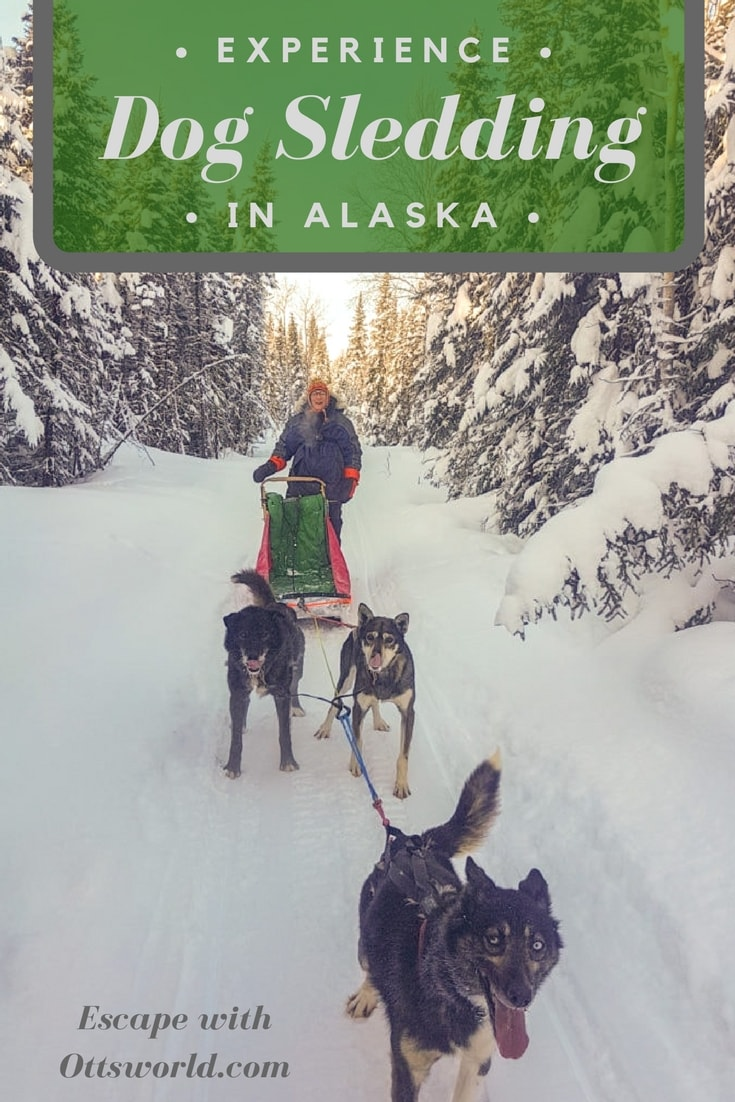 Experience Alaska's number one sport - dog mushing. Don't just ride along, learn how to mush your own team of dogs in Fairbanks!