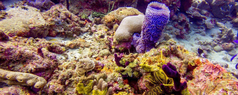 scuba diving surprises