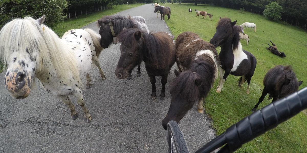 biking around miniature horses in spain