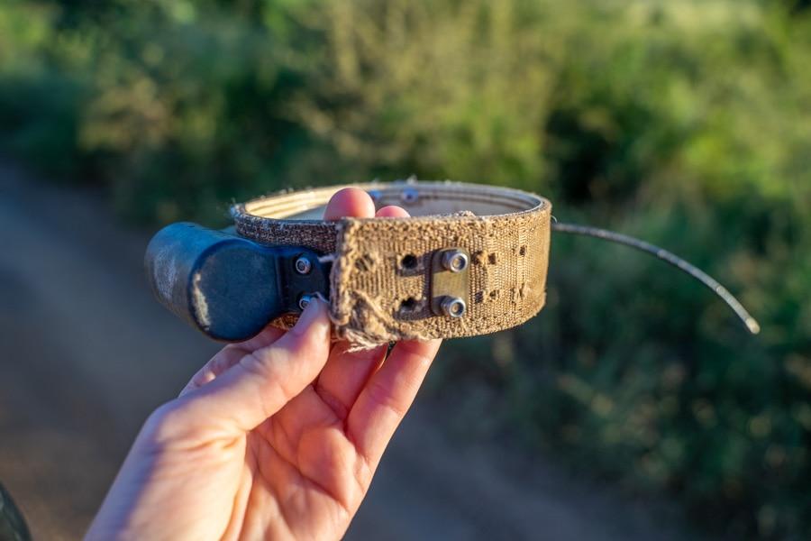 cheetah tracking collar