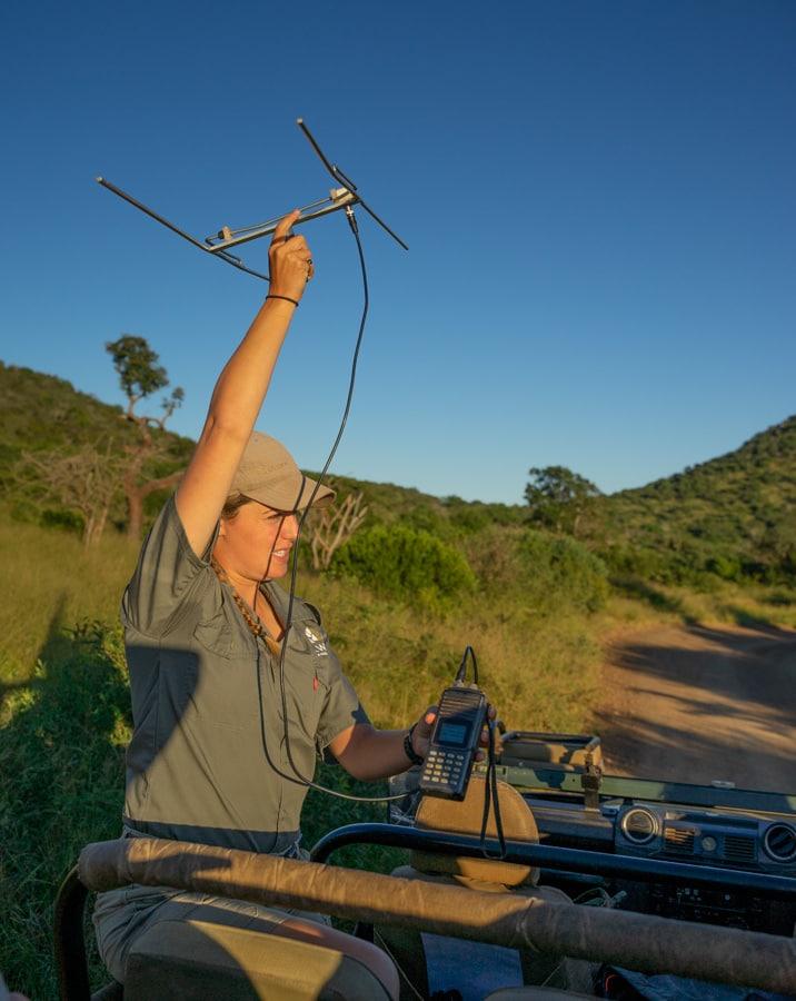 thanda cheetah tracking