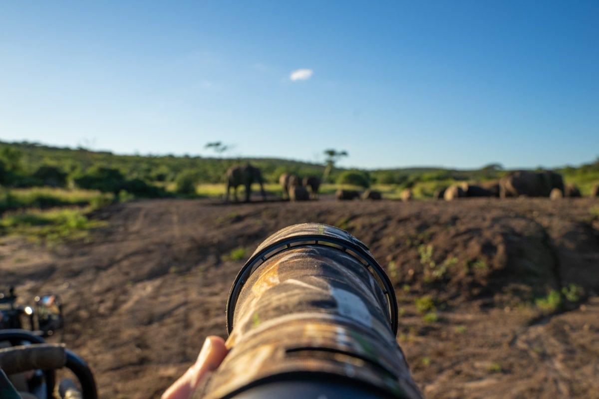 Telephoto lens for safari photography