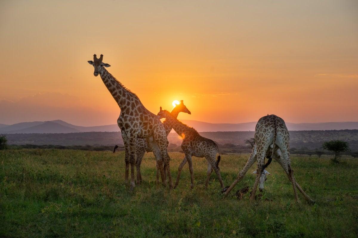 thanda safari epic trip
