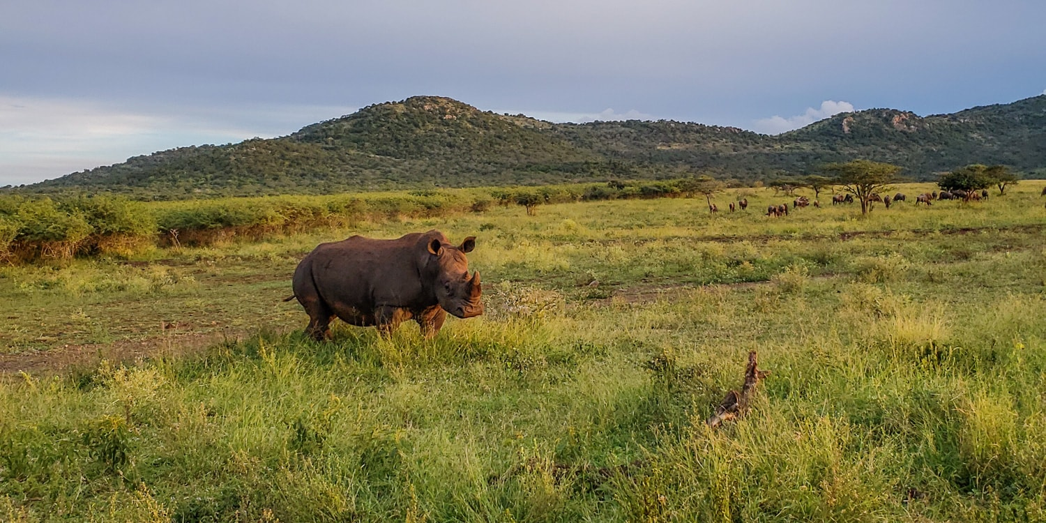 rhino conservation south africa