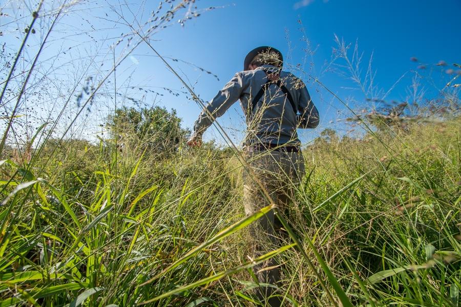 walking safari grasslands