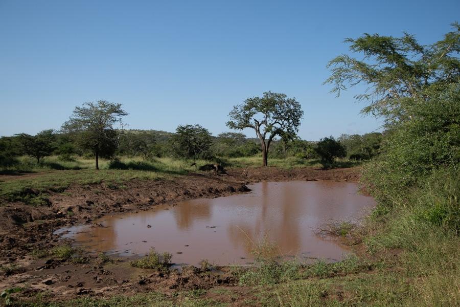 watering hole on safari