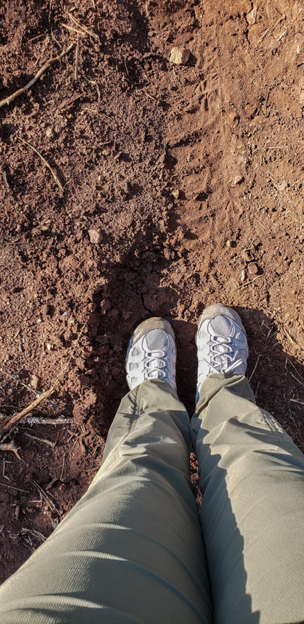 walking in a game reserve