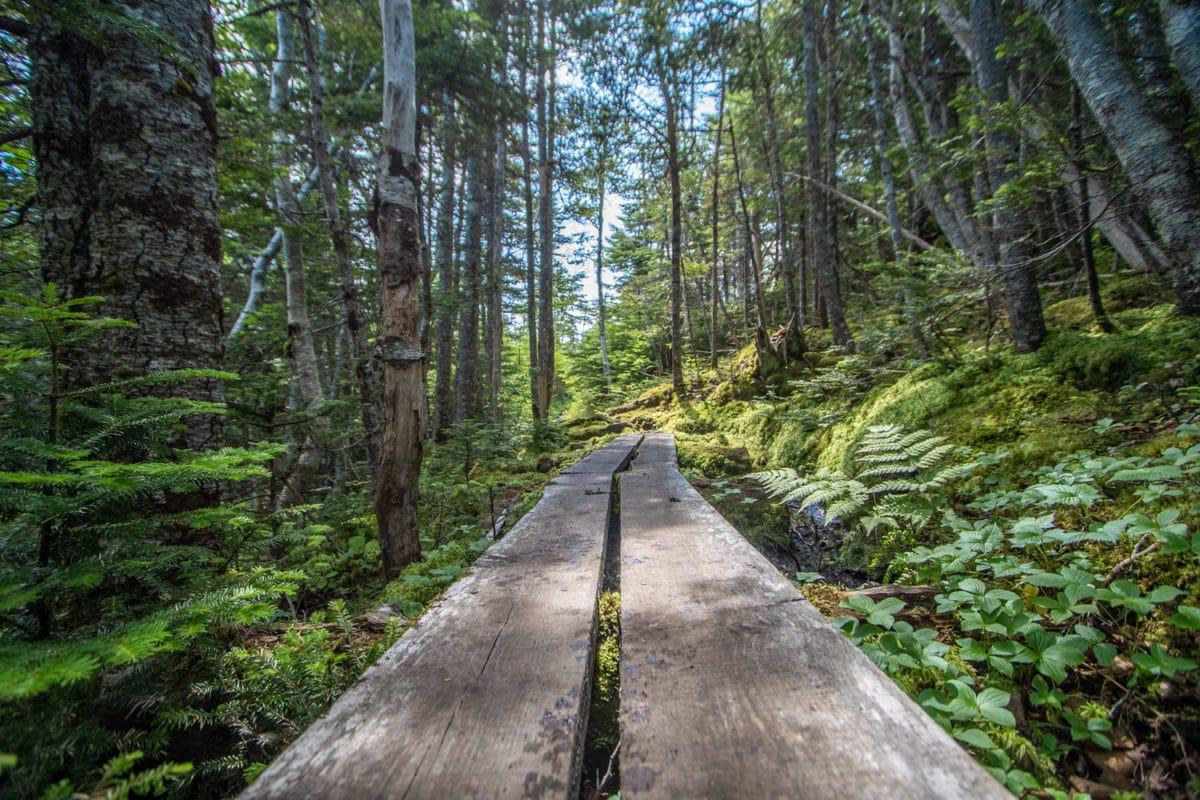 East Coast Trail newfoundland