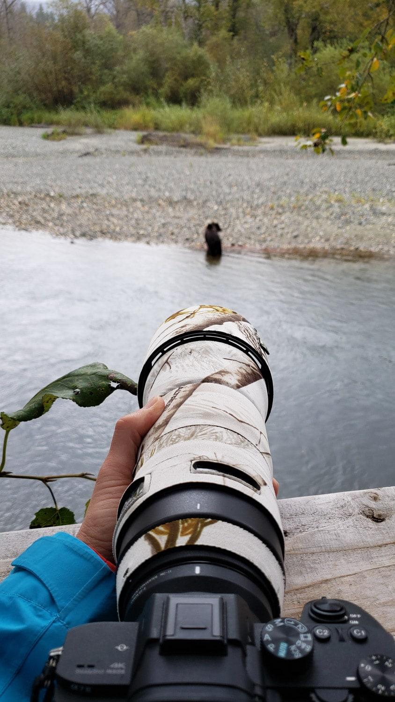 lenscoat wildlife photography