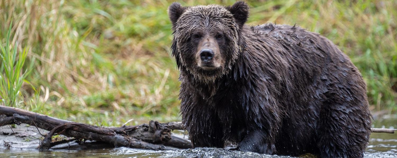 bear watching bella coola