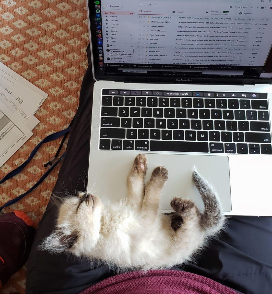 kitten napping on laptop