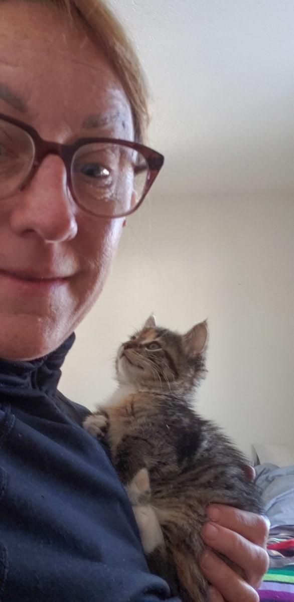 helping foster kittens gain weight