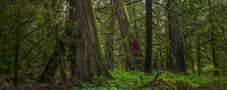 spirit of the great bear rainforest