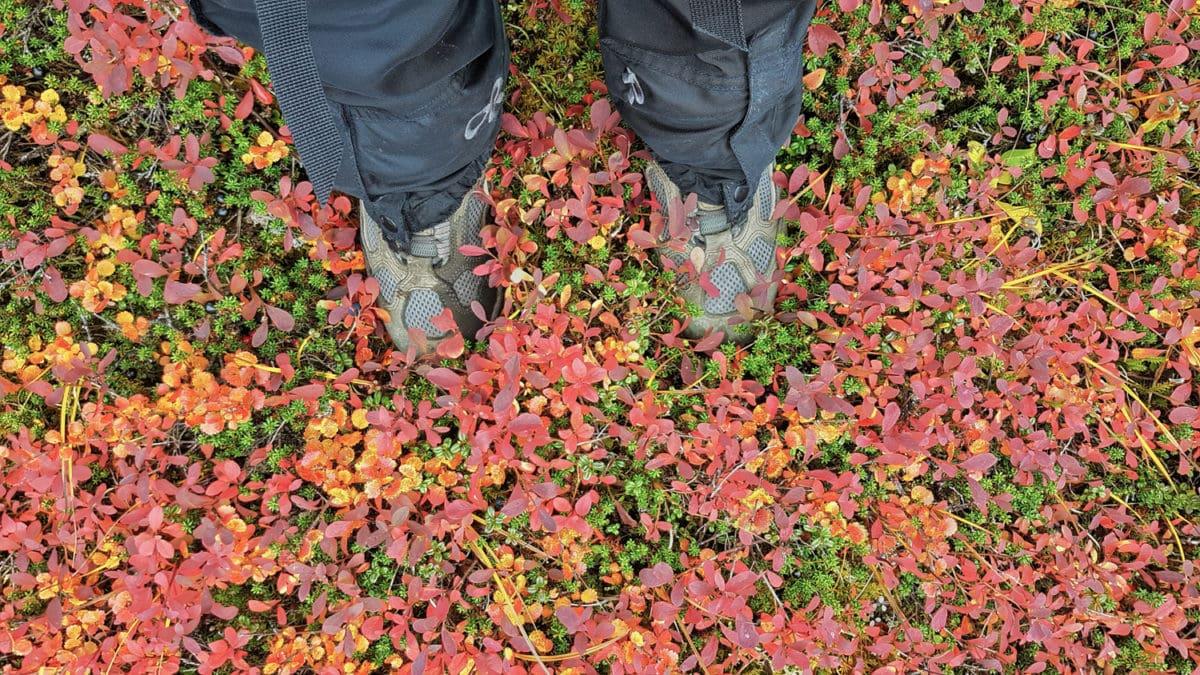Fall colors in alaska