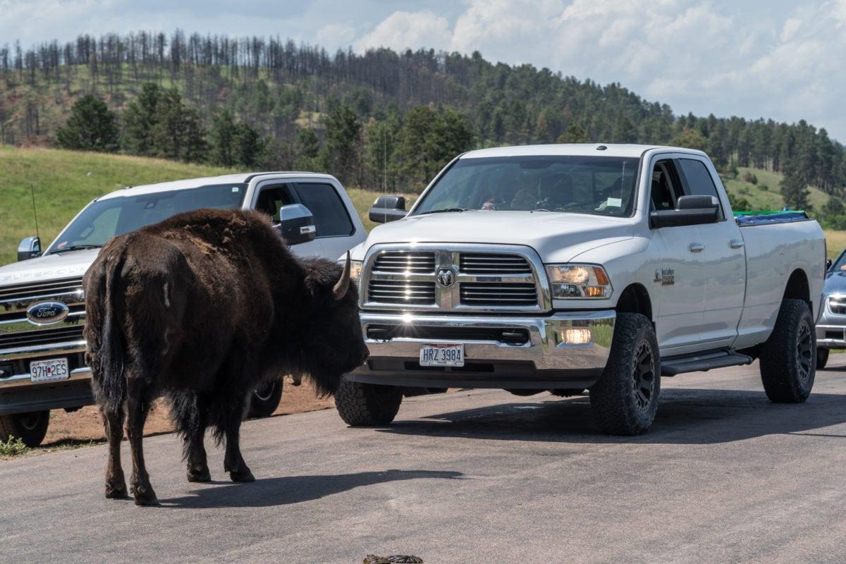 buffalo road block